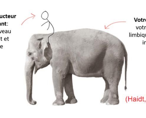 L'éléphant et la gestion du changement